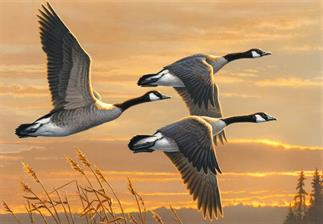 2017-united-states-federal-duck-stamp-contest