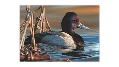 2020-duck-stamp-art-contest-winner-richard-clifton