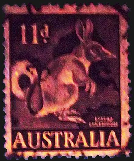 australia-rabbit-bandicoot-stamp-fluorescent-ultraviolet-light