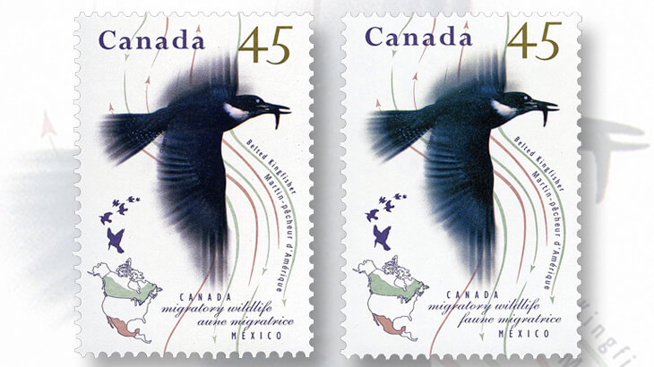 belted-kingfisher-stamp