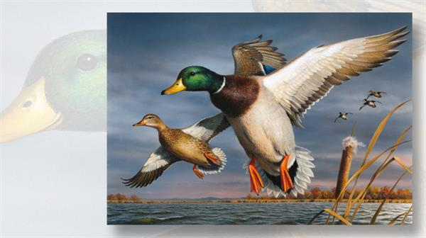 bob-hautman-painting-two-mallards-2017-federal-duck-stamp-art-contest