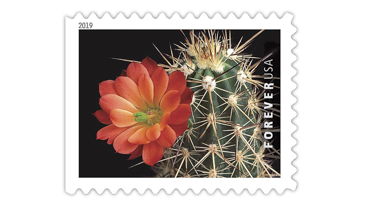 colorful cactus flowers set feb  15 at arizona stamp show