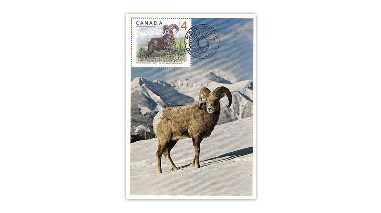 canada-bighorn-sheep-maximum-card