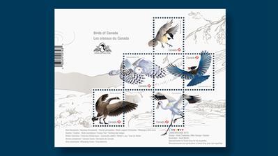 canada-birds-2018