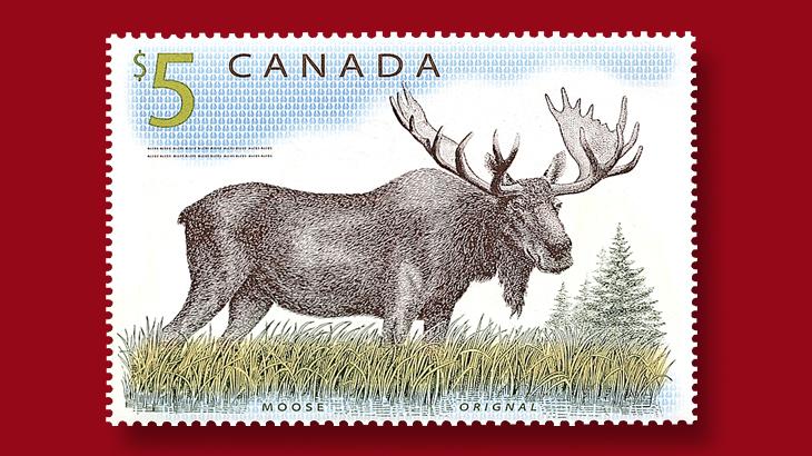 canada-moose