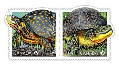 canada-turtles