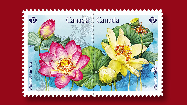 Lotus flowers flourish on canadian stamps march 1 linns the american lotus and the sacred lotus are depicted on new canadian stamps issued march 1 continuing the countrys spring flowers series that began in mightylinksfo