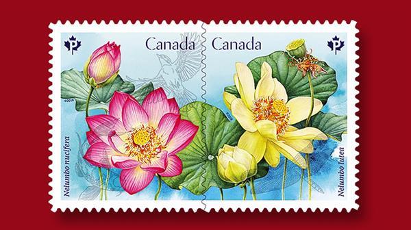 canadian-souvenir-sheet-lotus-flowers