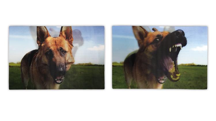 dogs-lenticular