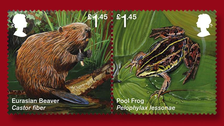 eurasian-beaver-pool-frog