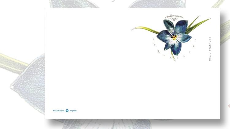 floral-illustration-dugald-stermer-imprinted-stamp-postal-card