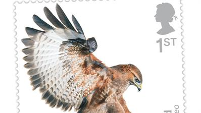 great-britain-birds-of-prey-preview