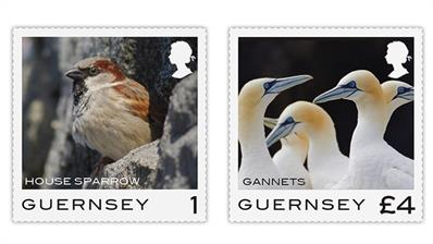guernsey-2021-sparrow-northern-gannets-birds-stamps