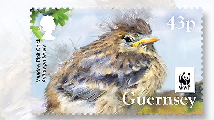 guernsey-meadow-pipit-stamp