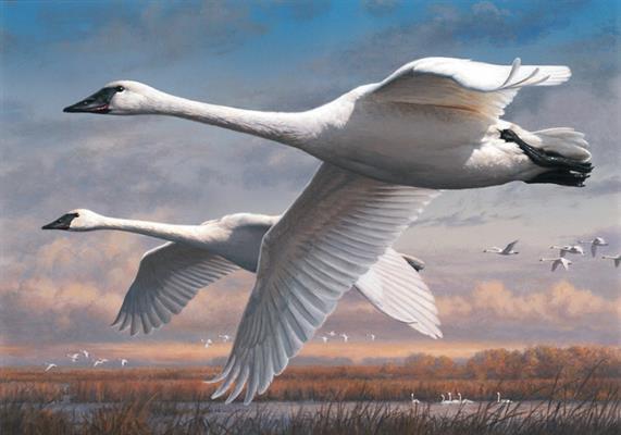 hautman-swans-2015-duck-art