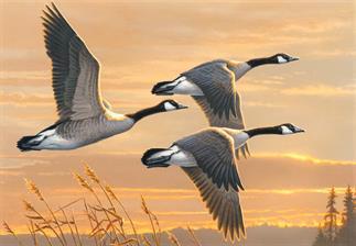 james-hautman-painting-2016-duck-stamp-contest-winner