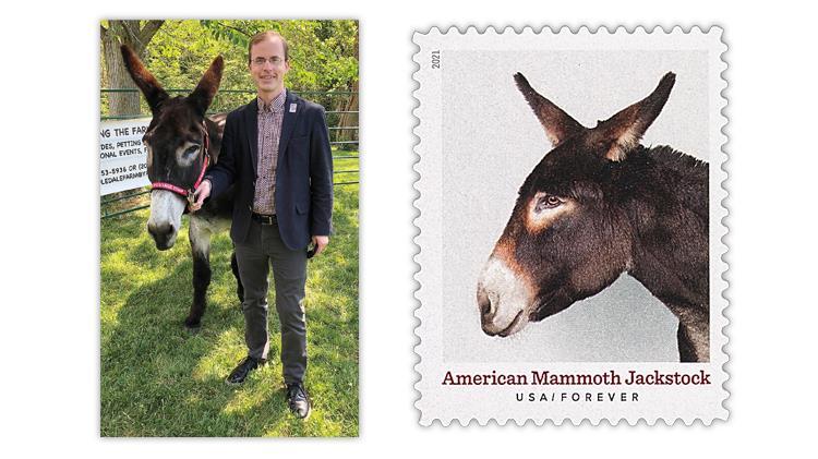 jay-bigalke-sharpy-american-mammoth-jackstock-donkey