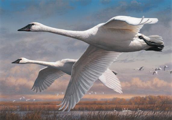joseph-hautman-duck-art-tour-world-stamp-show