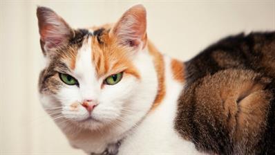 mean-cat-linns-buzz
