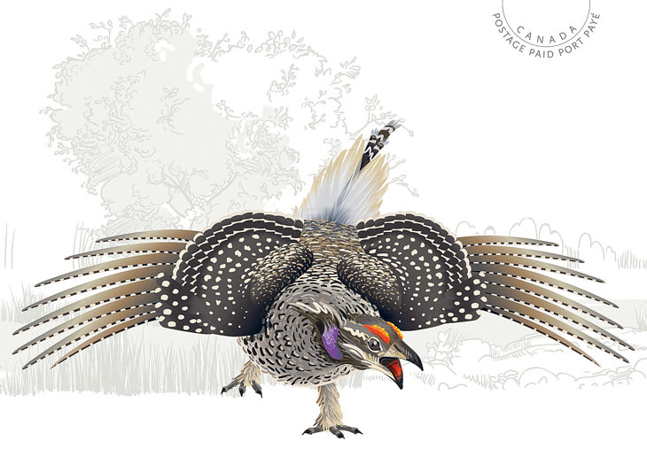 official-birds-of-canada-picture-postal-card