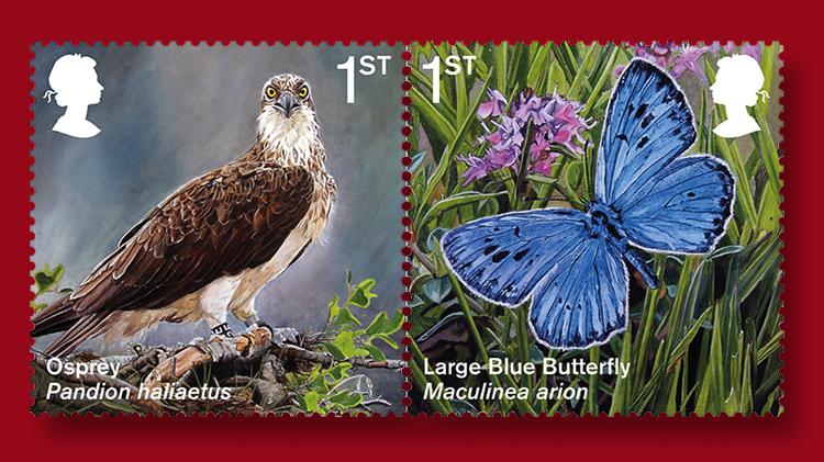 osprey-large-blue-butterfly