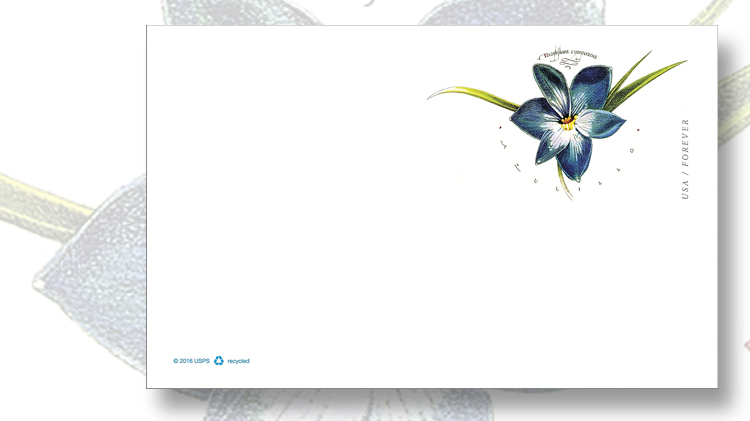 postal-card-depicting-chilean-blu-crocus