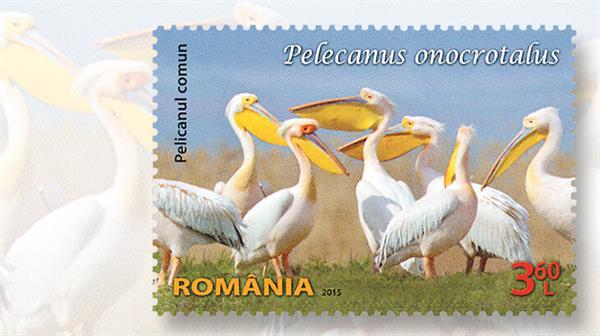 romania-pelican-issue-2015