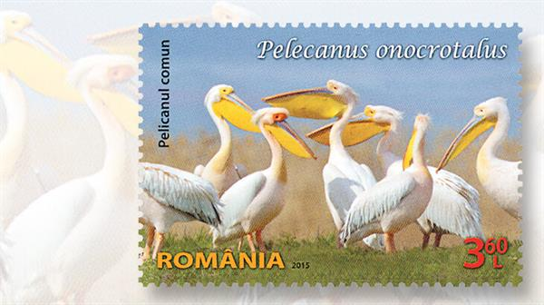 romania-pelican-issue-2015