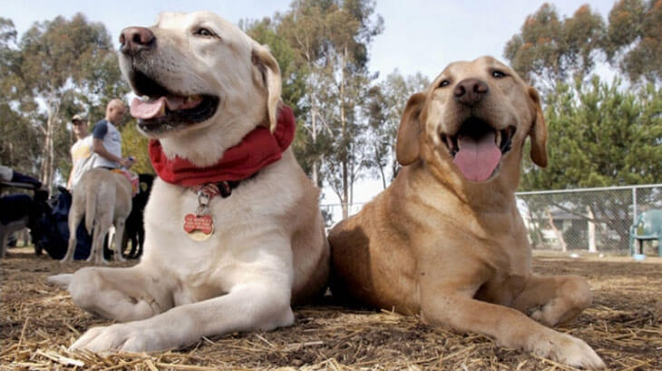Help Provide Hearing Dogs For The Deaf With Used Christmas