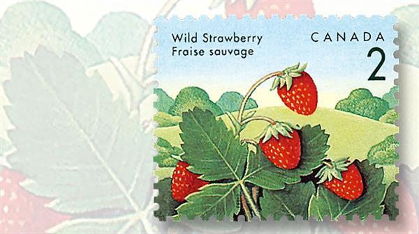 strawberries-wild-canada