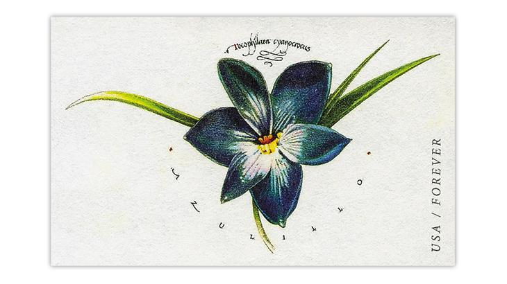 united-states-2017-azulillo-postal-card