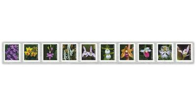 united-states-2020-wild-orchids-coil-stamps