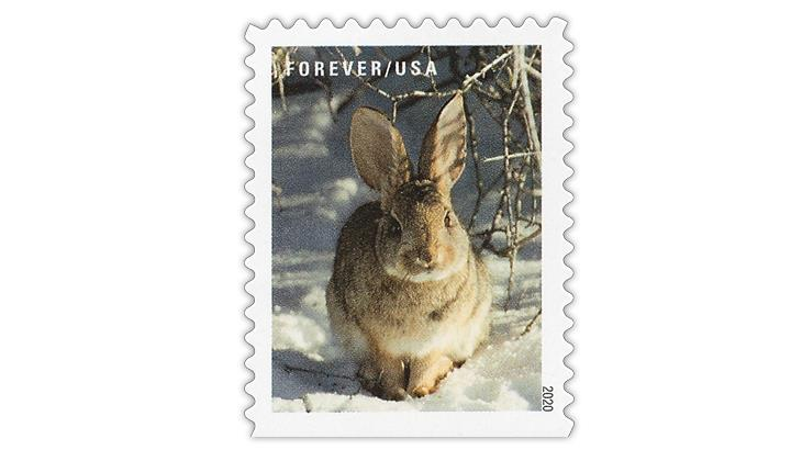 united-states-2020-winter-scenes-cottontail-rabbit-stamp