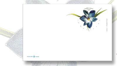 united-states-azulillo-chilean-blue-crocus-forever-postal-card