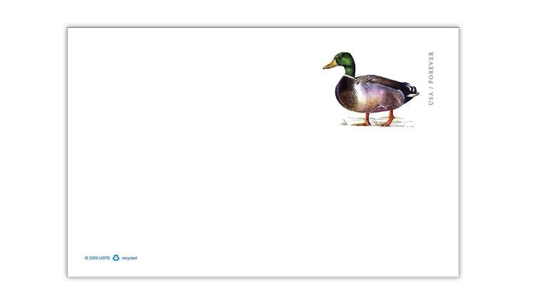united-states-mallard-duck-postal-card