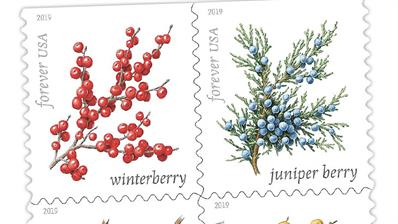 united-states-winter-berries-preview