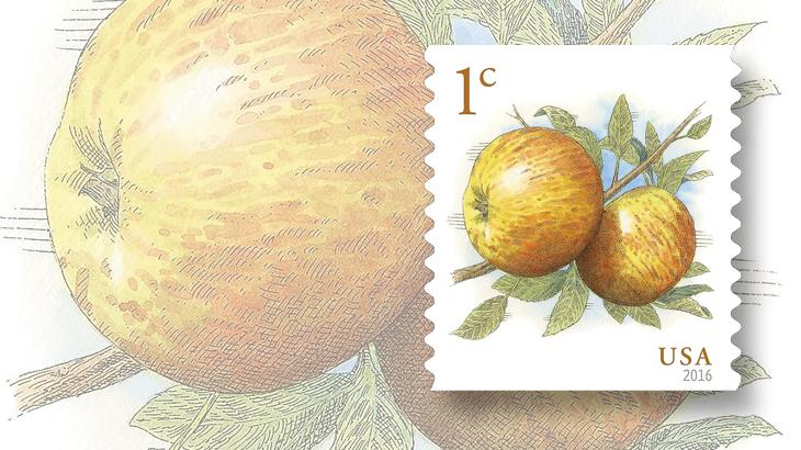 us-2016-albemarle-pippin-apples-bg