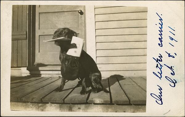 us-stamp-notes-dog-postcard-mail-carrier-service