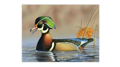 wood-duck-painting-sid-crawford-memorial-scholarship