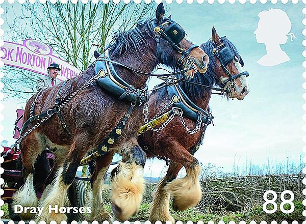 zne-dm-gb-horse3