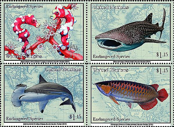 zne-dm-un-speciesfish-f1