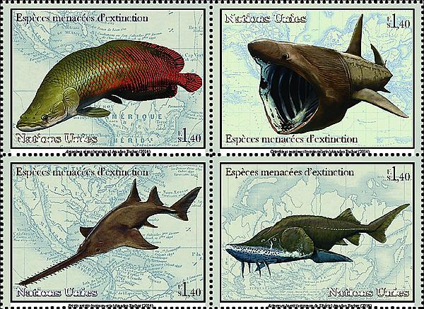 zne-dm-un-speciesfish-f2