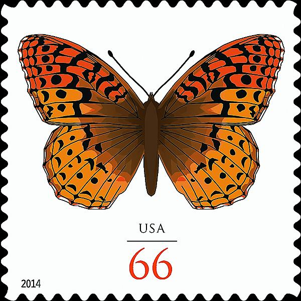 zne-jb-14art-butterfly