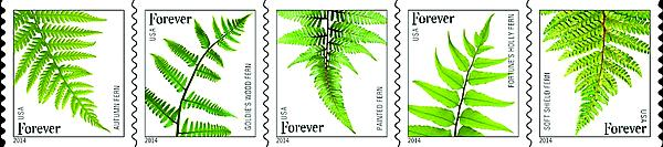 zne-jb-14art-ferns