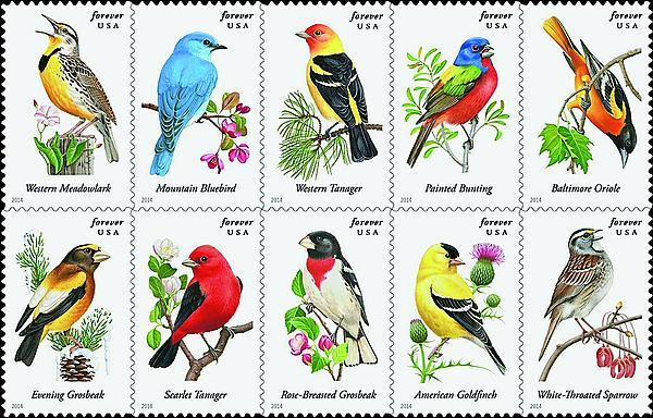 zne-jb-14art-songbirds