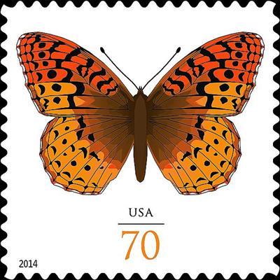 zne-jb-butterfly
