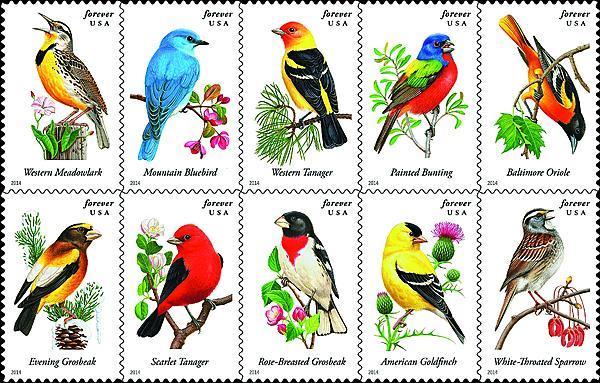 zne-jb-songbirds