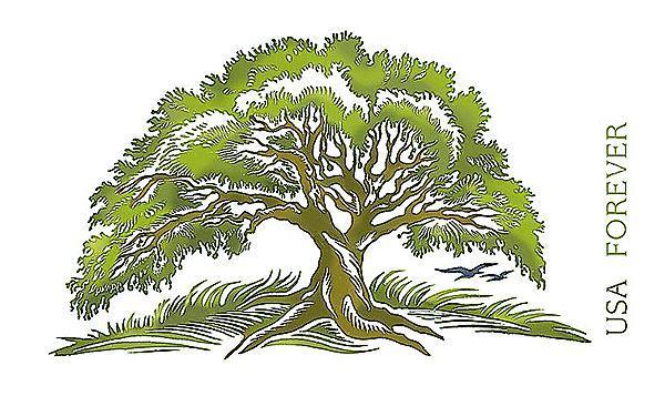 zne-jb-tree