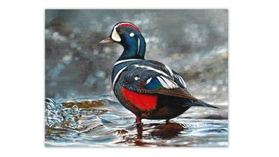 zne-mb-jr-duck-bg