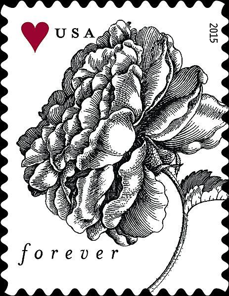 zne-mb-vintflower-f1a